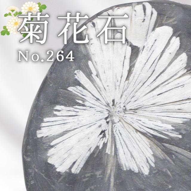 菊花石 No.264 【鑑賞用鉱石】