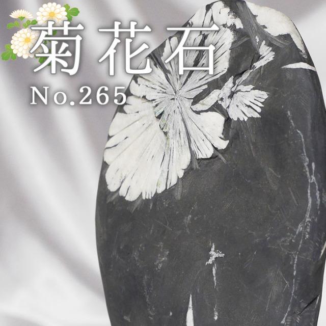 菊花石 No.265 【鑑賞用鉱石】