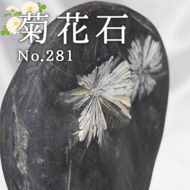 菊花石 No.281 【鑑賞用鉱石】