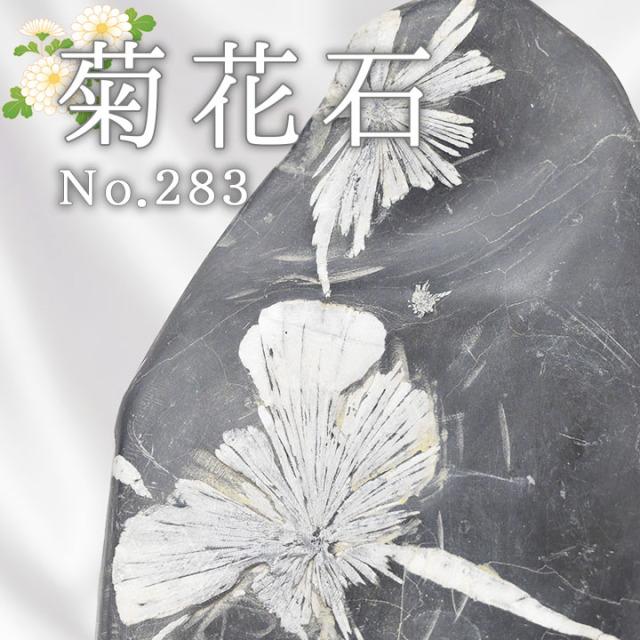 菊花石 No.283 【鑑賞用鉱石】