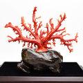 赤珊瑚 原木 拝見 3月誕生石 天然珊瑚 安産 出産 お祝い パワーストーン アップストーンオンビル