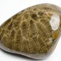 ペトスキーストーン petoskey フォッシルコーラル 珊瑚 化石 ミシガン州 オバマ 天然石 パワーストーン