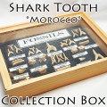 サメの歯 化石 コレクション 鮫の歯 モロッコ産 牙 化石 コレクションボックス 天然石 オンビル アップストーン