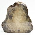 ペトスキーストーン petoskey stone 珊瑚の化石 フォッシルコーラル 置物 インテリア ミシガン州 パワーストーン