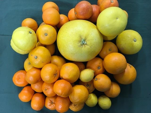 季節のかんきつ詰め合わせ 約5Kとムッキーちゃんセット(柑橘3~4種類セット)