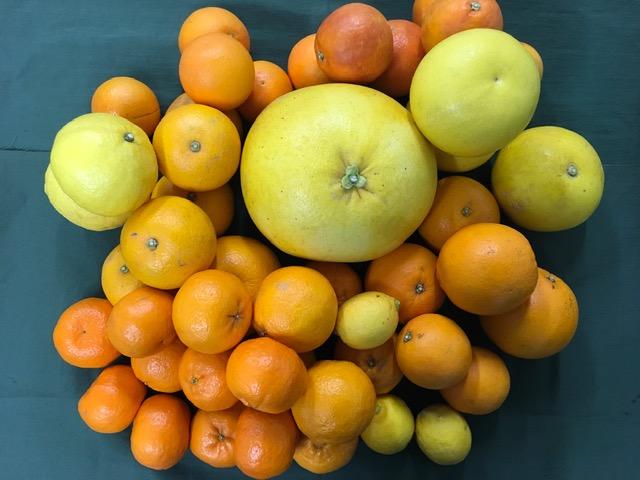 (お値打ち!!詰め合わせ・わけあり商品) 柑橘セット10kg