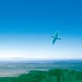 『Blue Bird Blue』黒石ひとみ
