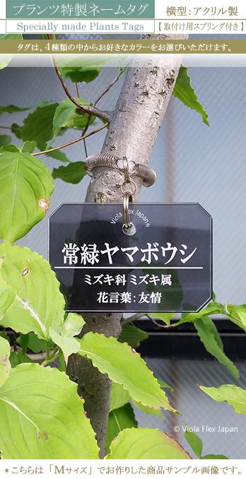 《 植物・樹木の名札 》プランツ特製ネームタグ 横型  【 取付け用スプリング付き 】アクリル製