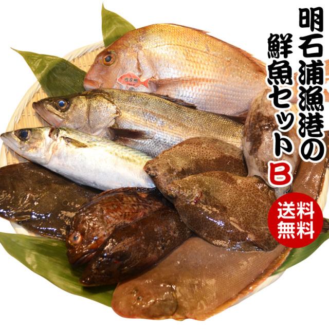 取れたて新鮮!明石浦漁港の鮮魚セットB 安心・安全な明石浦の魚【鮮魚セットB】