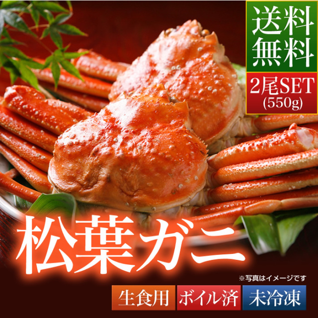 送料無料 鳥取県 境港産 ボイル 松葉カニ 蟹 A級 550g×2尾SET【松葉ガニ550A2セット】