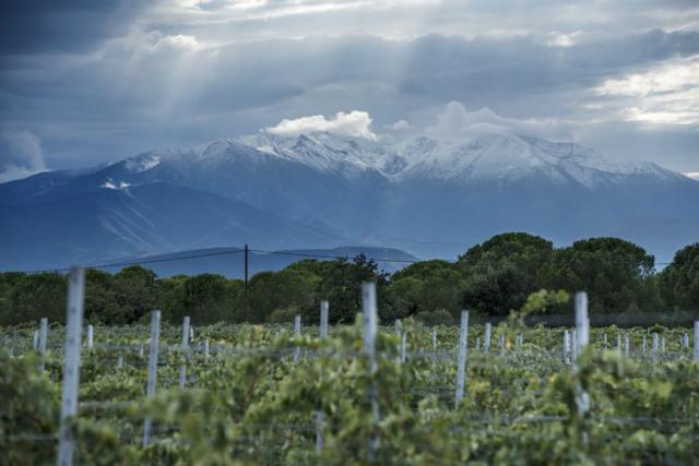 畑とピレネー山脈