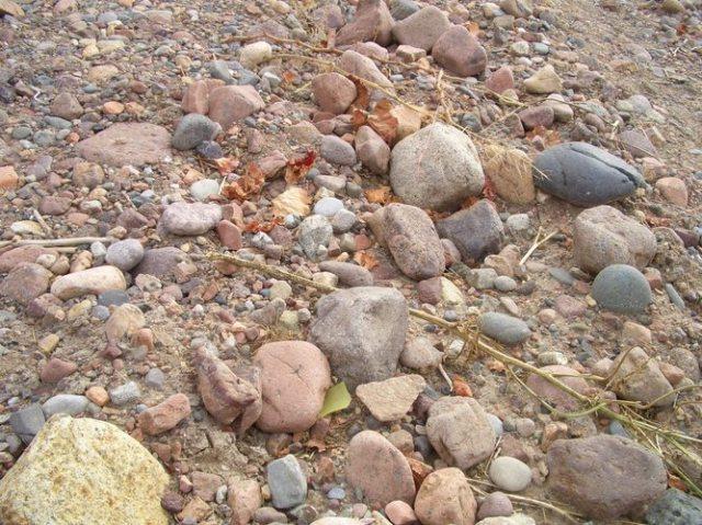 礫が多くみられる土壌