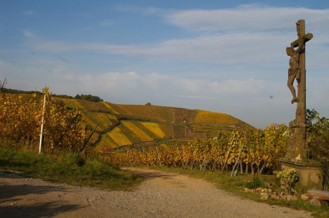 正しい土壌に正しい葡萄品種を