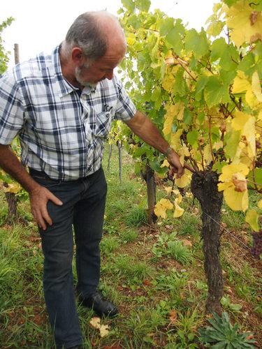 オーガニック栽培、自然酵母を使用