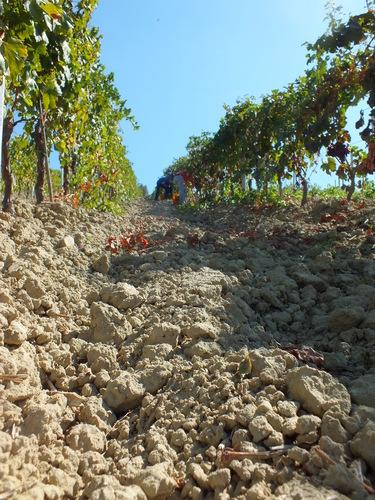ガリオッポの土壌
