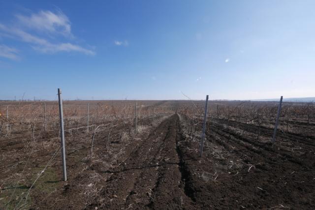 畑はチェルノーゼムと呼ばれる黒土