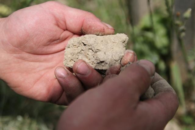 土壌は砂と粘土中心です