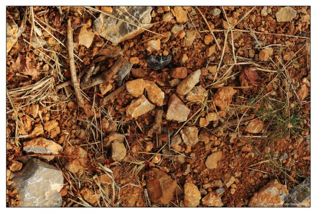 大き目の礫が覆う砂質粘土の土壌