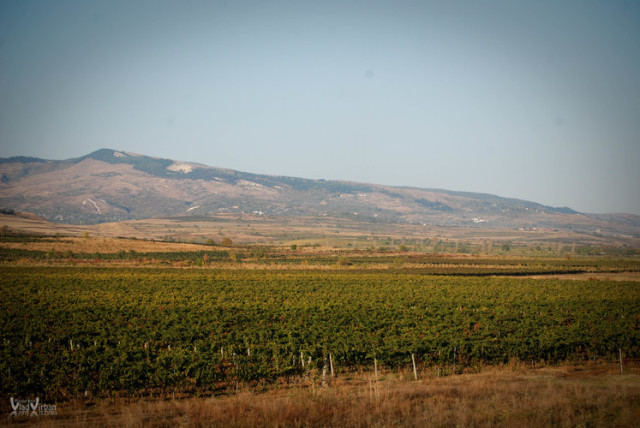 カルパティア山脈の南に広がる畑