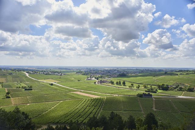 1級畑「デュレス」の畑の上から見渡すことのできる、ムルソーとモンテリーの畑