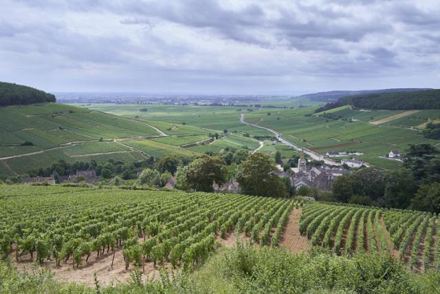 高台から見たペルナン・ヴェルジュレス村とコルトンの畑