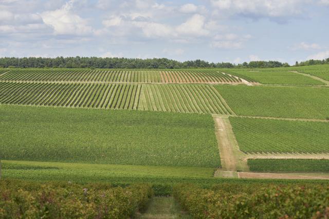 オート・コート・ド・ニュイの畑