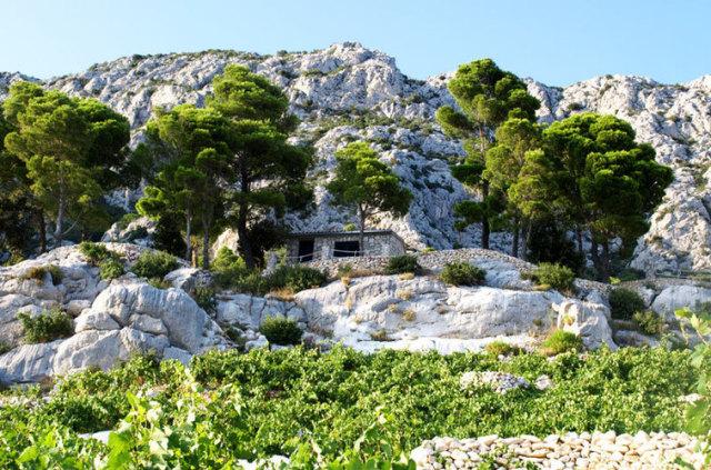 石灰岩の急斜面に葡萄畑はあります