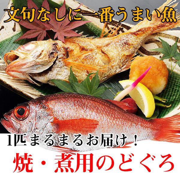 【鮮魚通販】のどぐろ(約180g〜200g 焼き・煮付け用)