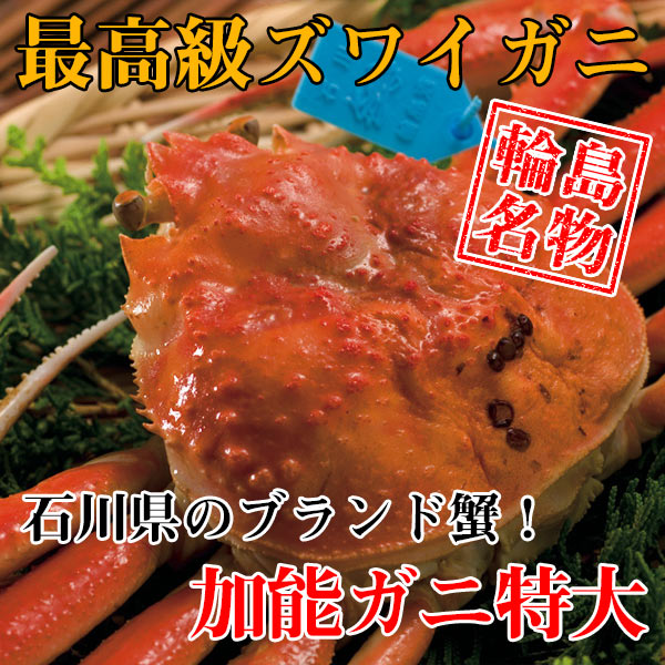 【カニ通販】ズワイガニ(加能ガニ)・特大※同梱不可・代金引換不可