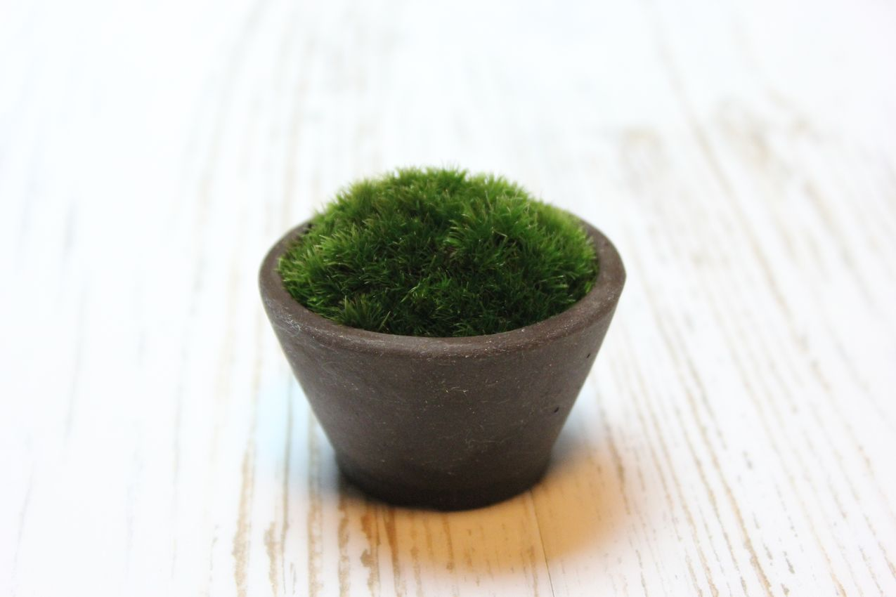 苔ぼん,苔,苔玉,ミニ盆栽,盆栽通販,