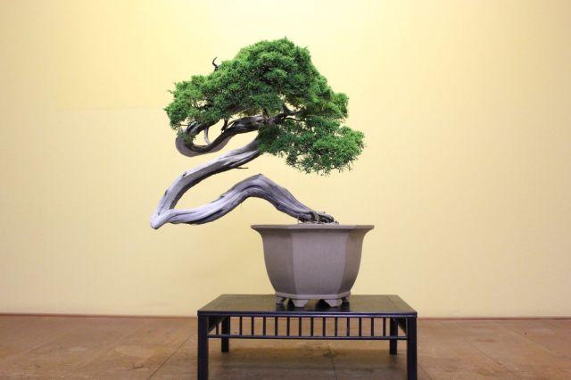 糸魚川真柏,苔,苔玉,ミニ盆栽,盆栽通販,