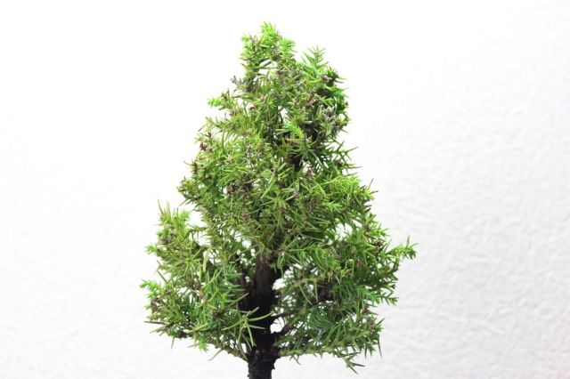 真杉,苔,苔玉,ミニ盆栽,盆栽通販,