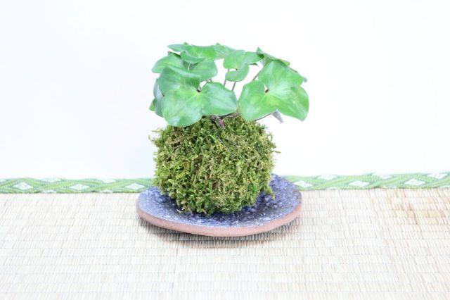 苔玉,苔,苔玉,ミニ盆栽,盆栽通販,