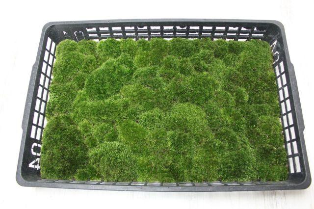 山苔トレイ,苔,苔玉,ミニ盆栽,盆栽通販,