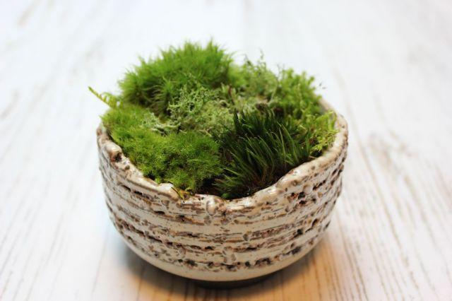 苔の小惑星,苔,苔玉,ミニ盆栽,盆栽通販,