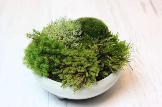 苔の惑星,苔,苔玉,ミニ盆栽,盆栽通販,