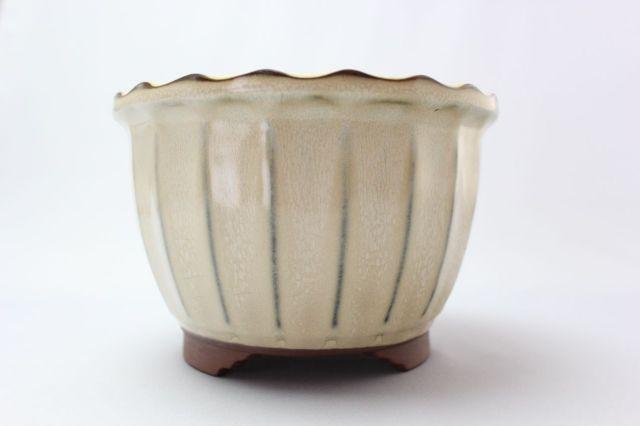 輪花,クリーム,6号,中国鉢,植木鉢