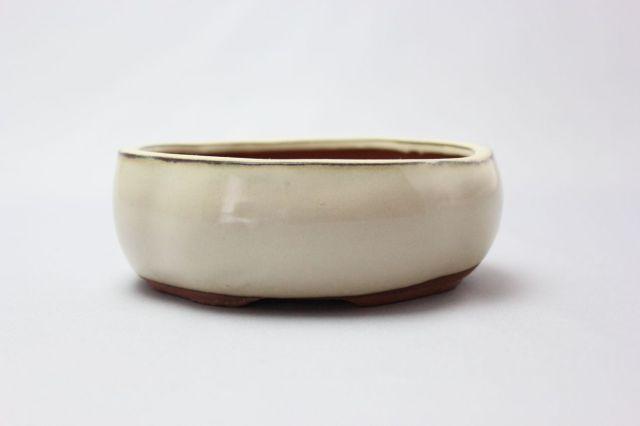 木瓜,クリーム,3.5号,中国鉢,植木鉢