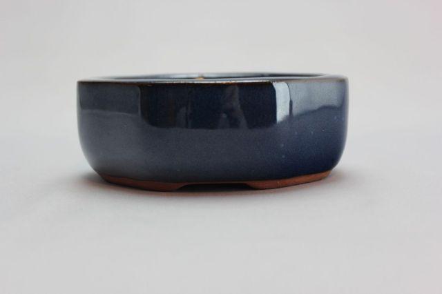 木瓜,生子,4号,中国鉢,植木鉢