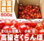 高級さくらんぼ(温室栽培)500g(2人前)