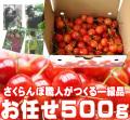 さくらんぼ(お任せ)500g