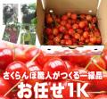 さくらんぼ(高砂・お任せ)1K