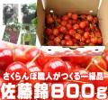 さくらんぼ(佐藤錦)800g