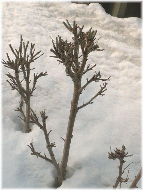 木(雪の中)