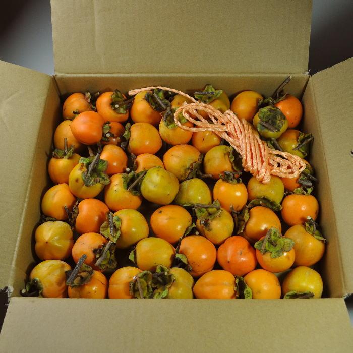 つるし柿用・干し柿用 渋柿[加工用]を柿の生産量日本一の和歌山県から産直