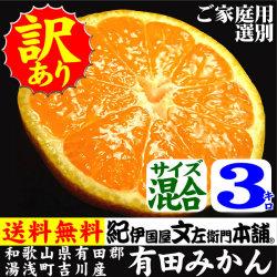 吉川産有田みかん