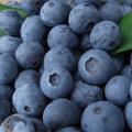 和歌山県産 冷凍ブルーベリー