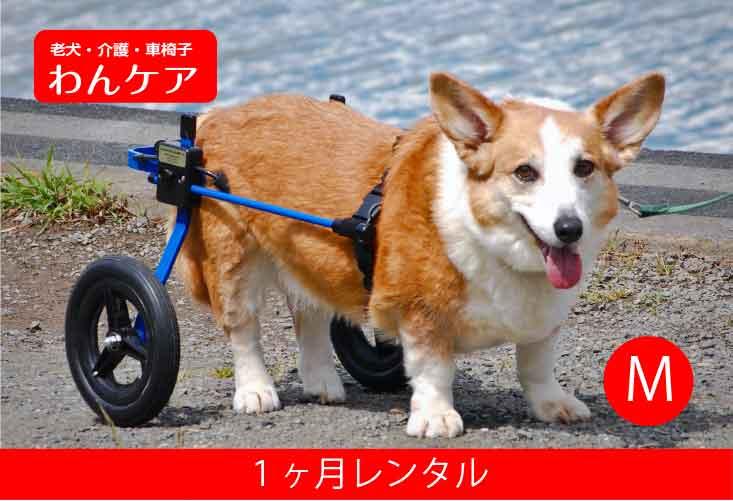 【1ヶ月レンタル】K9カート犬用車椅子[スタンダード]後脚サポート M(11.1〜18kg)用【犬用介護用品】車イス