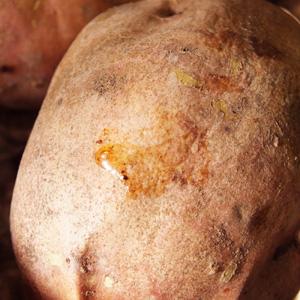 安納芋の蜜アップ