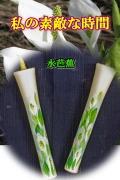絵ろうそく10号(手描き) 2本入 水芭蕉